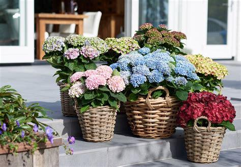 mooi in uw tuin magical ruby tuesday classylifeclassylife