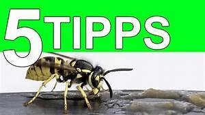 Kupfer Gegen Wespen : die 5 besten tipps gegen wespen 2017 youtube ~ Watch28wear.com Haus und Dekorationen
