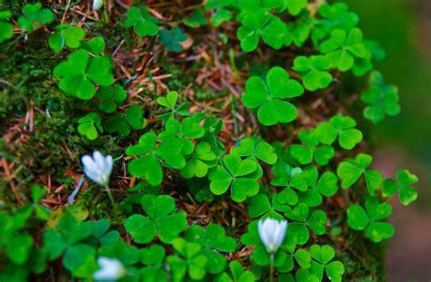 cuisine irlandaise à la découverte de l 39 irlande