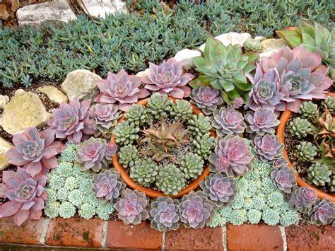 Garden Beautiful Succulents by Succulent Garden Stunning Plant Combination Great