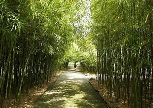 Hohe Sichtschutz Pflanzen : hoher winterharter bambus hohe bambusarten f r die gartengestaltung ~ Sanjose-hotels-ca.com Haus und Dekorationen