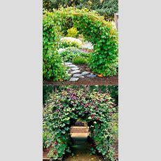 25+ Best Ideas About Flowering Vines On Pinterest