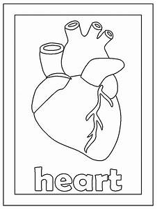 Fun Coloring Pages  Human Body Coloring Pages