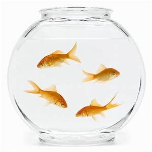 Fish Bowl 2015: Super Bowl Alternative Features a Goldfish ...