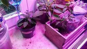 Pflanzen Bewässern Urlaub : pflanzen bew ssern im urlaub das fazit youtube ~ Michelbontemps.com Haus und Dekorationen