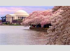 US Army MWR View Event Washington DC Cherry Blossom