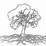 Roots Tree Oak Drawing Tattoo Drawings Clipart Trees Root Coloring Massive Tattoos Google Outline Sketch Easy Colorful Southern Everything Clipground sketch template