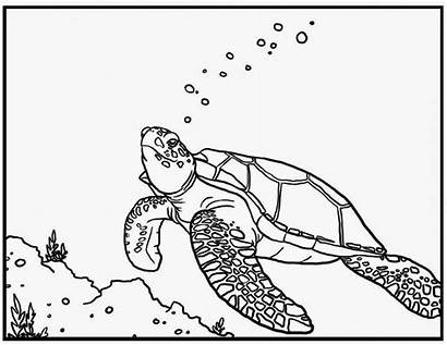 Turtle Sea Coloring Pages Star Neptune