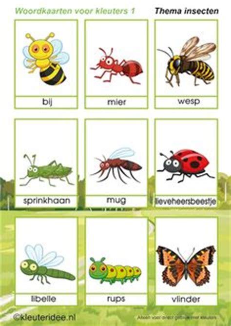 klokhuis insecten het klokhuis bijen davinci zomer