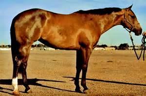 Quarter Horse Coat Colors