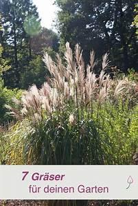 Gräser Für Gartengestaltung : 7 tolle ziergr ser f r deinen garten gr ser sichtschutz und terrasse ~ Sanjose-hotels-ca.com Haus und Dekorationen