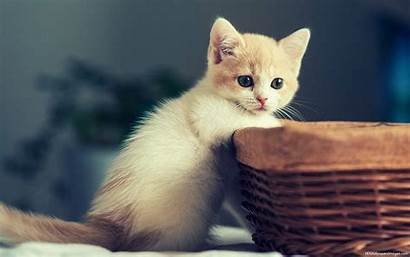 Kitten Wallpapers Cat Funny Kittens Puppy Cats