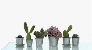 Comment Entretenir Un Cactus : le type d engrais id al pour un cactus ~ Nature-et-papiers.com Idées de Décoration