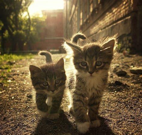 super cute   pets  reddits aww