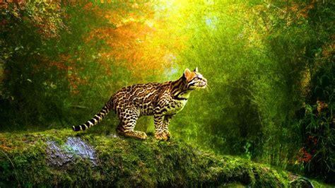 animals hd wallpapers  mobile  wallpapergetcom