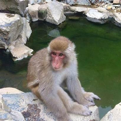 Monkeys Monkey Snow Park Jigokudani Photoblog August