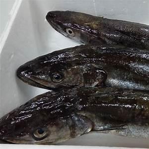 Comprar Pescado Fresco Online  Merluza Directa De Lonja