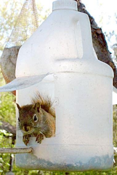 recycled squirrel  bird feeder feelin squirrely