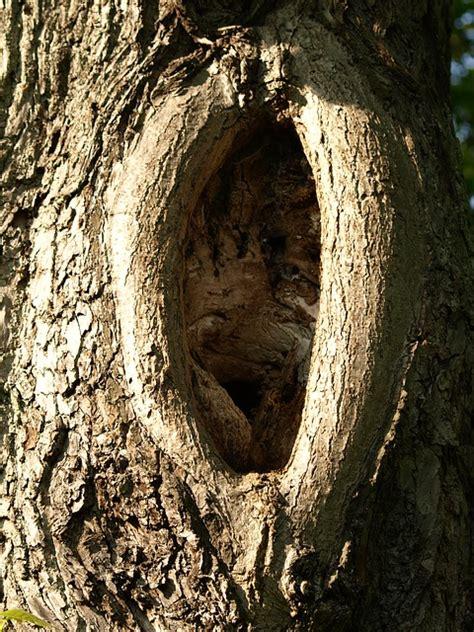 stock photo knothole log gnarled tree bark