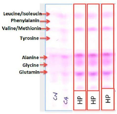 thin layer chromatography analyses   amaranth