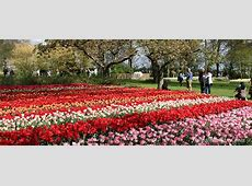 Best time to visit Keukenhof Tulips in Holland