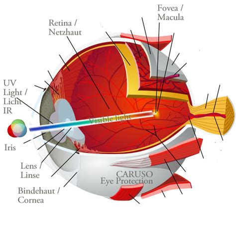 blue light macular degeneration caruso freeland macular degeneration