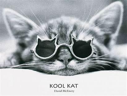 Cool Cat Kool Mcenery David Kat Kitty