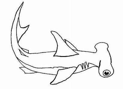 Shark Coloring Hammerhead Pages Hungry Lemon Its