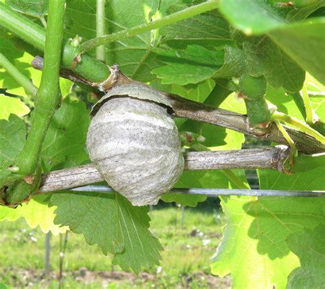 EnoViti: Vineyard Nests