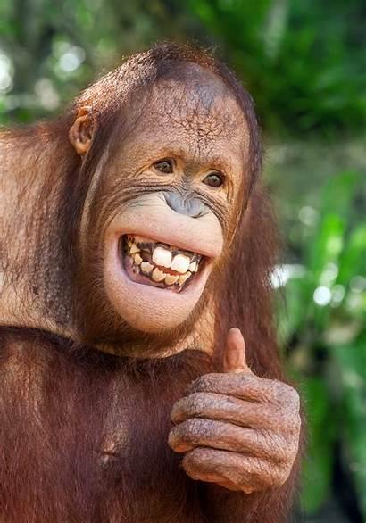 Orangutan Mintz Monkey Bowl Storybook Supercam Peyton