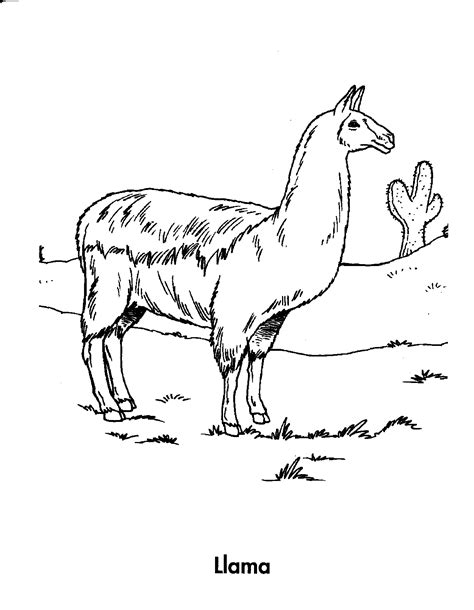 Free Coloring Pages Of Llama In Pajama