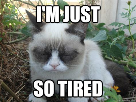 Tired Cat Meme - true book addict true to books cat thursday overwhelmed and stressed