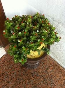 Zimmerpflanzen Feng Shui : ber ideen zu pflegeleichte zimmerpflanzen auf pinterest zimmerpflanzen wohnzimmer ~ Indierocktalk.com Haus und Dekorationen