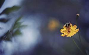 Bee Wallpapers HD Pictures – One HD Wallpaper Pictures ...