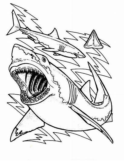 Shark Coloring Teeth Anatomy Sharks