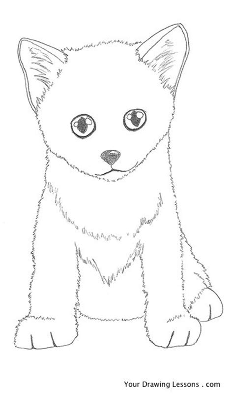 draw  kitten  drawing lessons