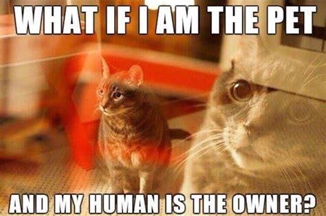Mindblown Meme - little kitty mind blown beheading boredom