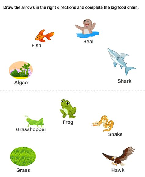 food chain worksheets worksheet to learn