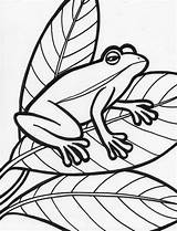 Frog Coloring Pages Printable Sheet Template Colouring Sheets Drawing Adult Tree Preschool Templates Popular Cartoon Frogs Outline Preschoolers Animal Tattoodaze sketch template