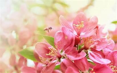 Desktop Flower Wallpapers Flowers Pink Floral Wall