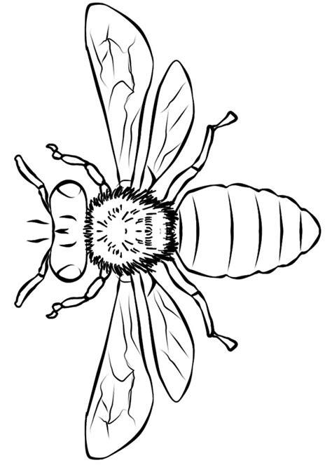 disegni  api da colorare pianetabambiniit