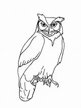 Owl Outline Drawing Realistic Simple Line Owls Horned Tattoo Animal Coloring Easy Drawings Template Clipart Getdrawings Printable Tattoos Pages Tatuaggio sketch template
