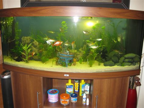 juwel vision 450l community tank tropical fish site