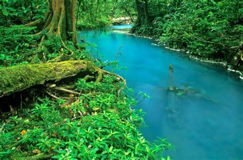 costa ricas turquoise river  natural optical illusion oddity central collecting oddities