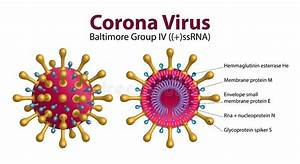 Diagram Of Corona Virus Particle Structure Stock