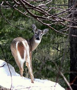 76 best Live animal web cams images on Pinterest | A ...