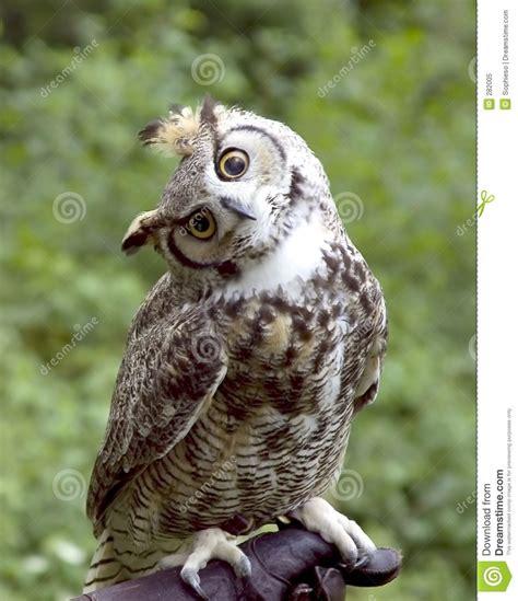 eulen bilder lustig eule suche tiere animals eule suche und
