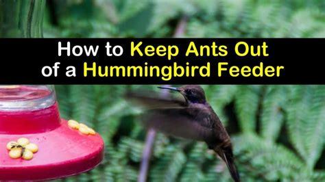 ants    hummingbird feeder