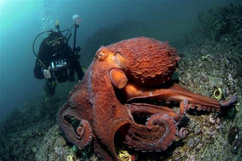 Zemūdene.: Astoņkāji. 1.daļa.