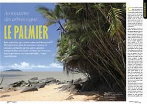 Artisanat De Guyane : artisanat en feuille de palmier une saison en guyane ~ Premium-room.com Idées de Décoration